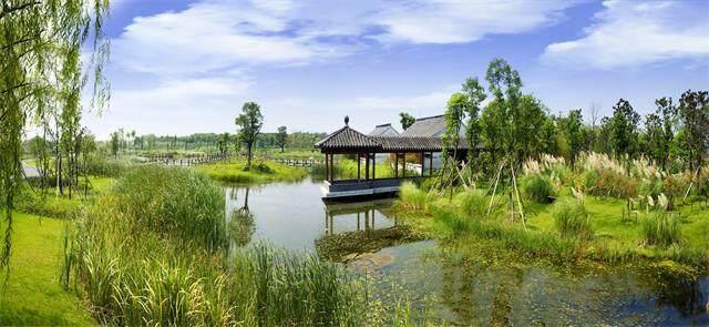 芦苇湿地公园