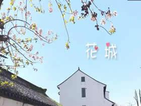 视频来了!常熟春,花之城